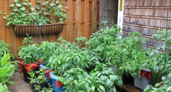 Balkonda Bitki Yetiştirmek İçin İpuçları
