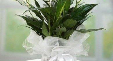 Doğum Yapan Anneye Çiçek