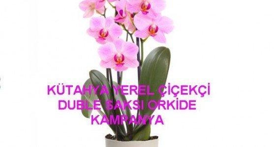 Orkide Nasıl Nemlendirilir?