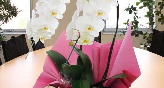 Yeni İş Tebriği Çiçekler