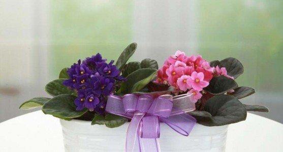Ocak Ayında Açan Çiçekler